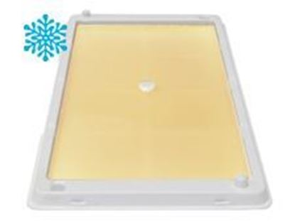 Picture of Catchmaster 48WRG Glue Tray with Cold Weather Polar Bear Glue - White (2 count)