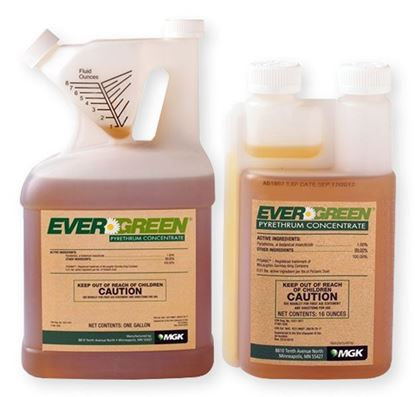 Picture of EverGreen Pyrethrum Concentrate